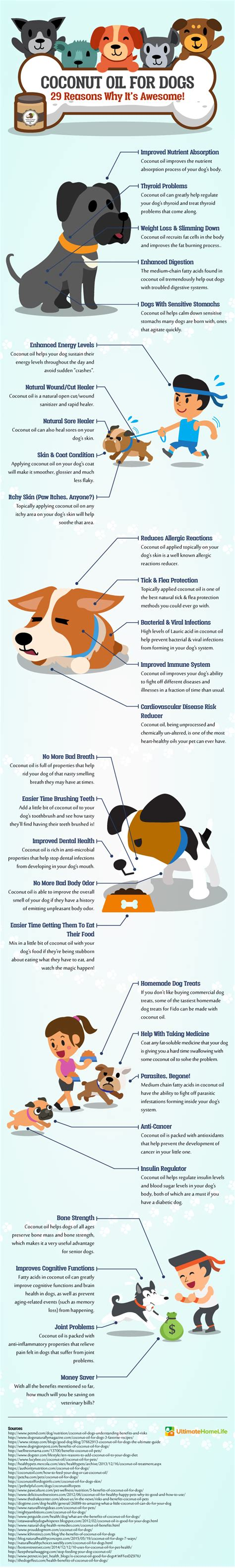 coconut bad for dogs the 29 benefits of coconut for dogs infographic