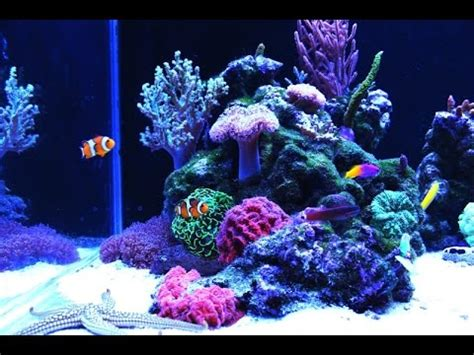 Aquascaping Reef Tank Relax Full Hd Nano Reef Aquarium Youtube