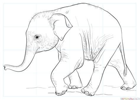 Drawing Elephant by How To Draw A Baby Elephant Step By Step Drawing Tutorials