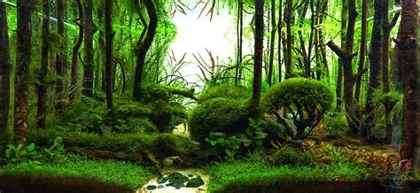 forest scape peyzazhi akvarium domashniy akvarium