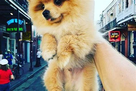logan paul puppy logan paul puppy pictures to pin on pinsdaddy
