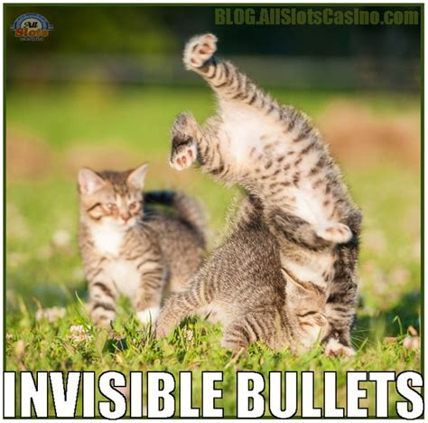Invisible Cat Memes - cats from a casino blog crazy jack wild casino