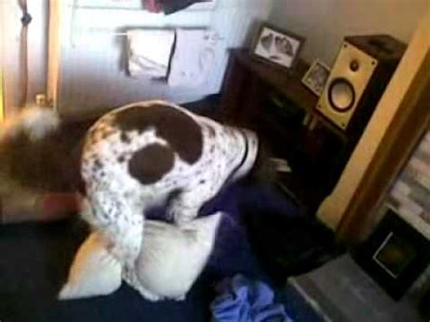 How To Hump A Pillow While On Your Period by Springer Spaniel Pillow