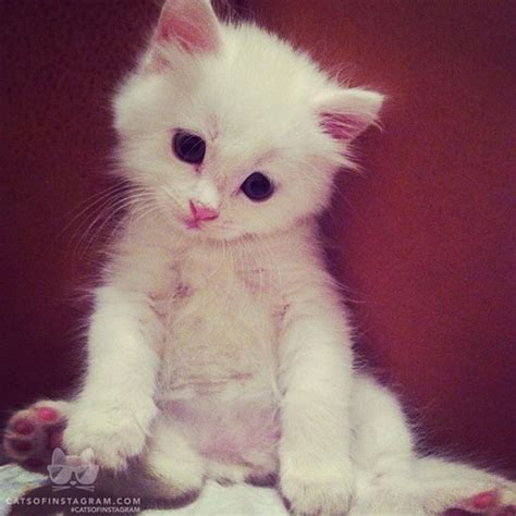 White Fluffy by White Fluffy Cat Images