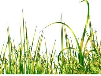 Set Grass Zc vettoriali gratis it free vectors