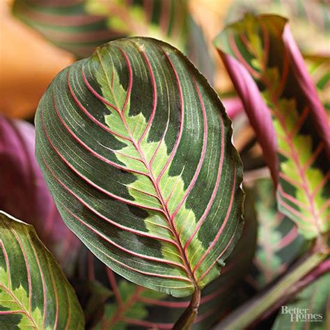 favorite  light houseplants plants