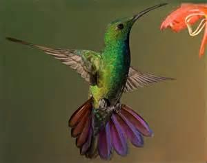 kolibri bird tattoos