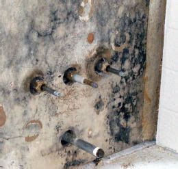 bathroom fungus dangerous mold inspection testing mold in bathroom