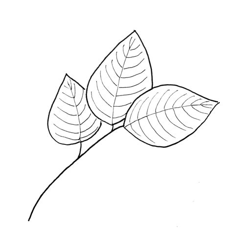 leaf pattern line drawing fall leaf pattern printables just paint it blog
