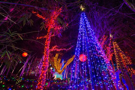 Houston Zoo Zoo Lights Zoo Lights In Houston