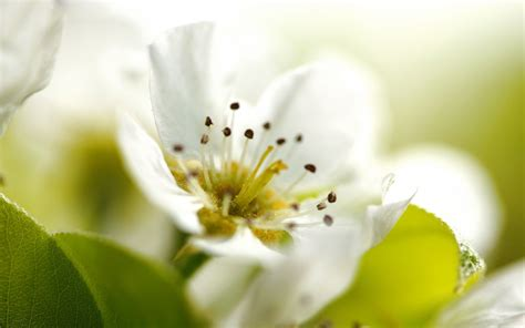 fiore bianco fiore bianco