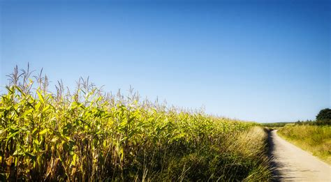 summer days and summer 1509809899 cornfield on a late hot summer day johan neven flickr