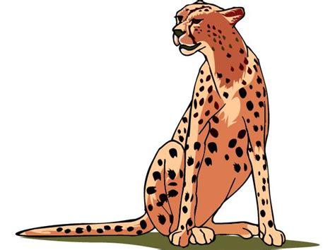 cheetah clipart best cheetah clipart 15020 clipartion
