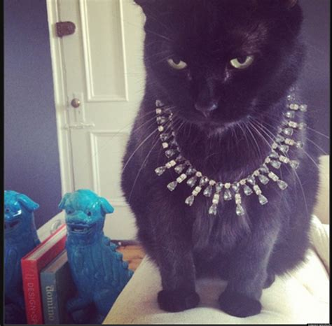 cat instagram presenting rich cats of instagram or the most spoiled