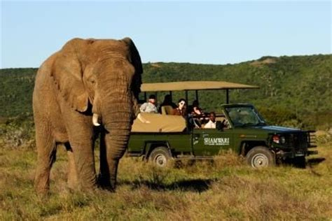 Kasual Ansania africa tamed travel on safari with your family at