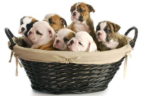 dog pregnancy calendar driverlayer search engine