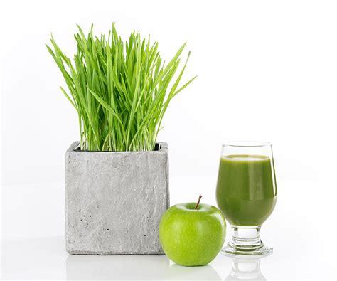 Juicer Wheatgrass wheatgrass juice recipe