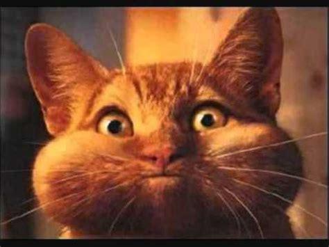 imagenes tontos y mas tontos gatos tontos y graciosos muy chistosos youtube