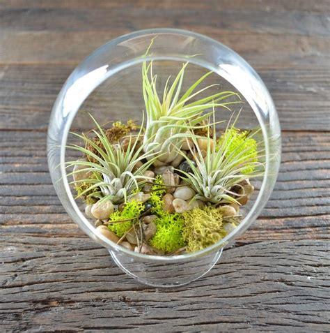 amazing Cheap Bathroom Decor Ideas #2: 00-tillandsia-airplant-air-plant-aerophyte-epiphyte-ideas-in-interior-design-growing-in-a-florarium.jpg