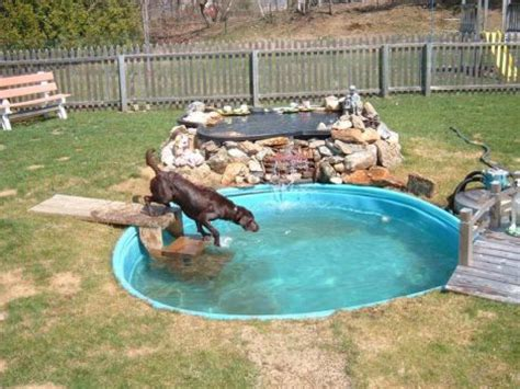 provide dogs access to water backyard ideas for dogs top dog friendly backyards healthy paws