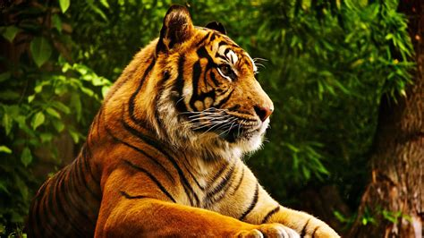 wallpaper 4k tiger tiger 4k ultra hd wallpaper and background 3840x2160