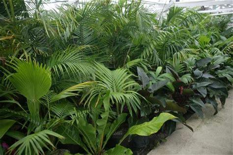 tropical plants palm www pixshark com images galleries with a bite