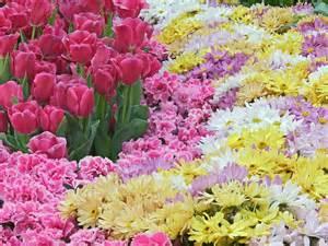 beautiful flowers image beautiful nature flowers wallpapers wallpaper
