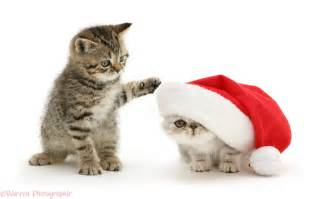 Santa with puppies and kittens christmas wallpaper pictures to pin on