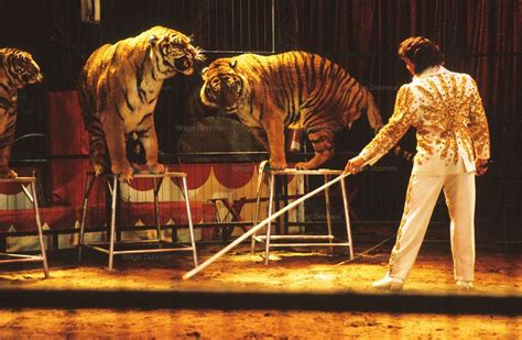 Animal Cruelty In Circuses Essay by Circus Animals Cirquedusoleil Cavalia Writing Prompts Animals And Writing