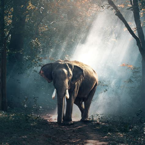 wallpaper elephant forest hd animals
