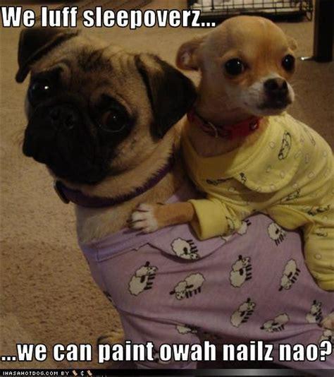 lol dogs lol dogs dogs photo 13517935 fanpop