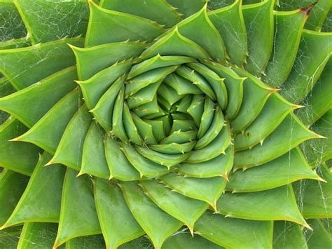 pattern in nature answers art s the answer fractals math and art in harmony