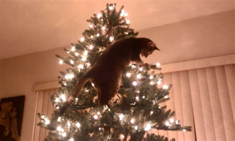 christmas tree disasters holidaze open thread with kitties we hunted the mammoth