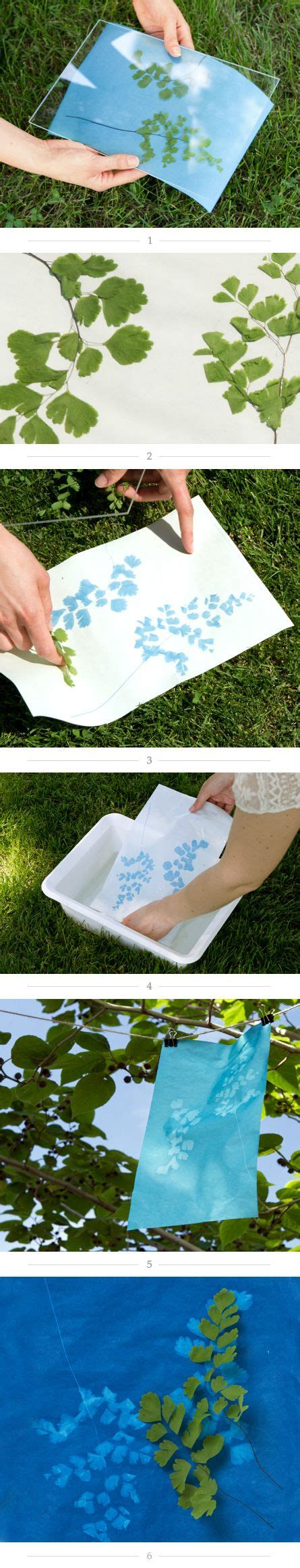 How To Make Cyanotype Paper - how to create a sunprint sun 4 year anniversary and