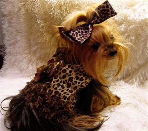yorkie dresses 17 best images about wardrobe for gennevieve on for dogs pets and puppys