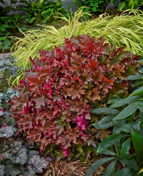 fall blooming plants zone 5 perennials that burst into color for fall proven winners