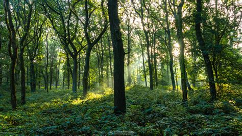 forest green photography wallpaper