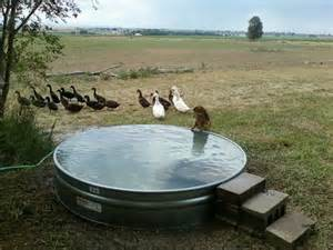 Backyard Pond Maintenance Best 25 Dog Pond Ideas On Pinterest Dog Pools Plastic