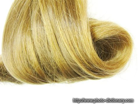 hair of the meaning hair definition of hair by the free dictionary hair swirl photo picture definition at