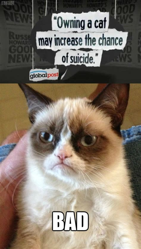No Meme Grumpy Cat - the no grumpy cat reverse memes know your meme
