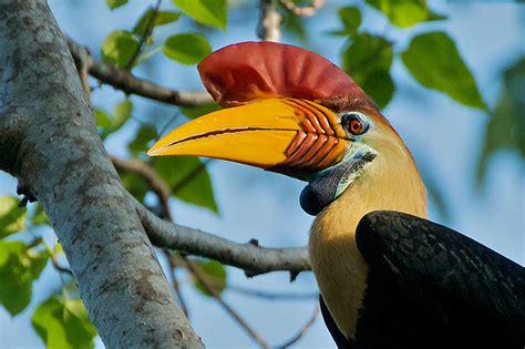 knobbed hornbill crane photography