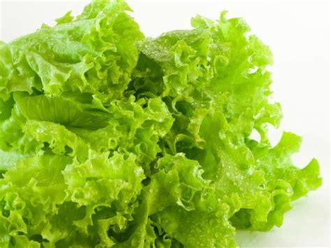 imagenes vegetales verdes vegetales verdes imagui