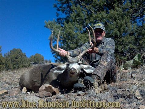mexico guided mule deer hunt blue mountain outfitters