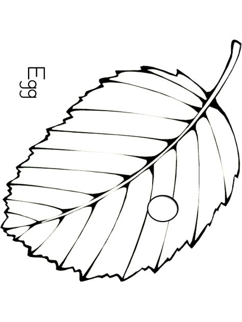 caterpillar egg coloring page free butterfly cocoon coloring pages