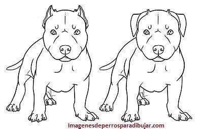 imagenes para dibujar de perros pitbull imagenes de perros pitbull para colorear o calcar y pintar
