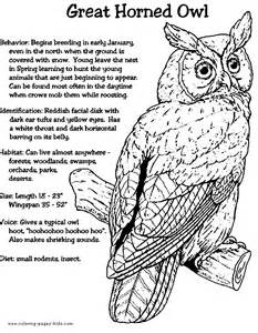 Barn Owl Pellets Facts Great Horned Owl Color Page