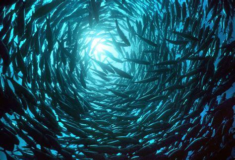 colonie poissons   Daily Geek Show