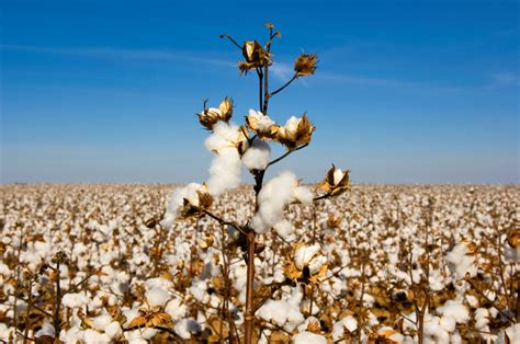 texas commodities top agriculture commodities in texas farm flavor