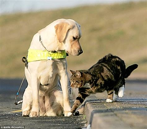 how are guide dogs trained cats and dogs are supposed to fight like well cats and dogs so what makes leo and