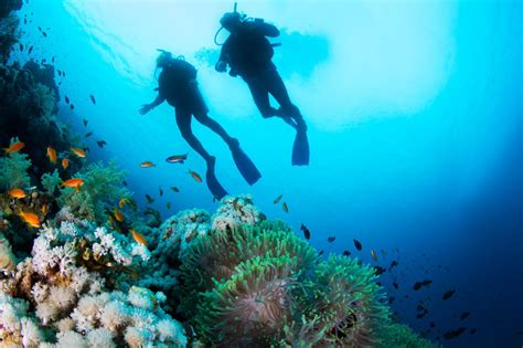 best scuba diving spots in the world discover the best dive in the world